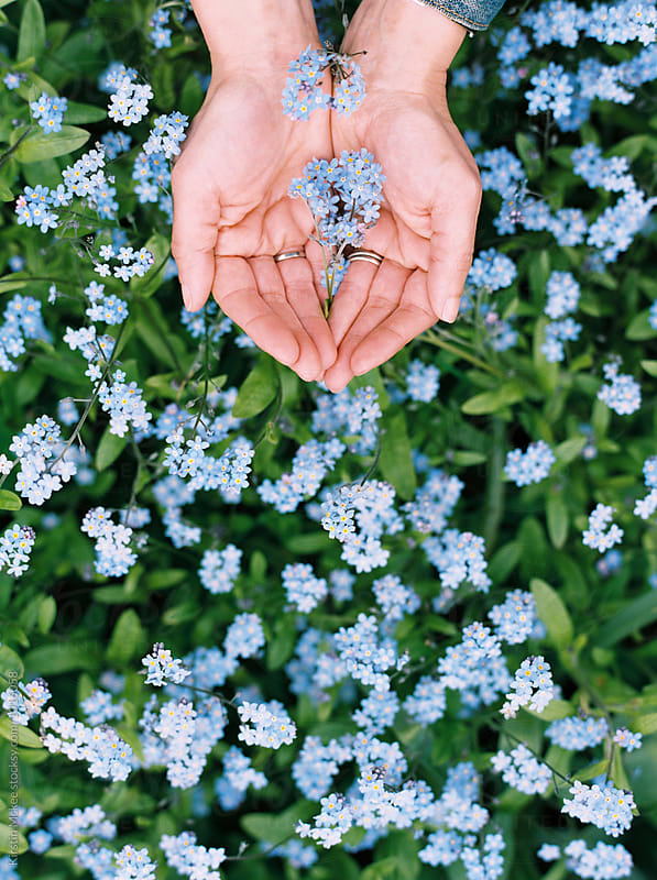 Holding forget me nots by Kirstin Mckee for Stocksy United