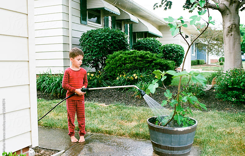 boy waters fig tree by Maria Manco for Stocksy United