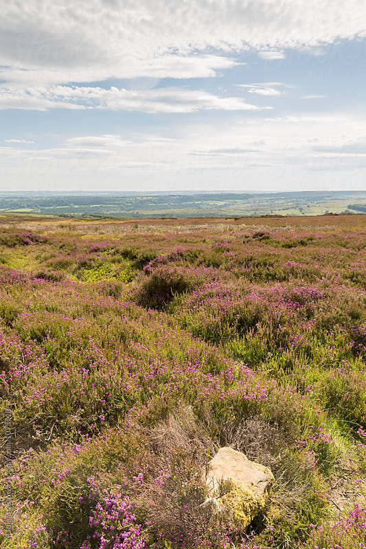 View of The North York Moors National Park by Marilar Irastorza for Stocksy United