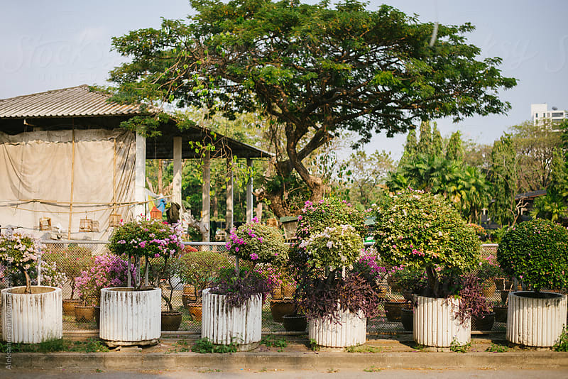 Botanical garden by Aleksandra Jankovic for Stocksy United