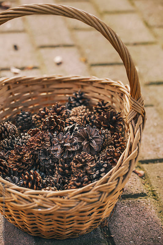 Wicker basket full of pine cones. by BONNINSTUDIO for Stocksy United