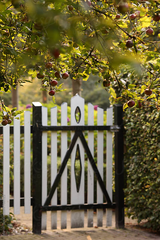 Apple tree and fence door in a garden in october by Marcel for Stocksy United