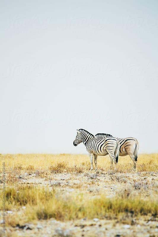 Vertical shot of two zebras on African savanna by Alejandro Moreno de Carlos for Stocksy United