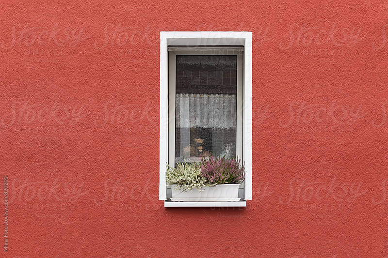 Flowers in small window within red wall by Michael Zwahlen for Stocksy United