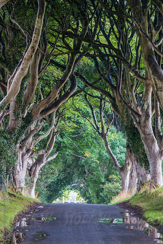 The Dark Hedges by Marilar Irastorza for Stocksy United