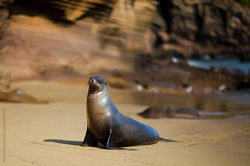 Galápagos Islands, Punta Pitt, San Cristóbal Island, Ecuador by Mark Pollard for Stocksy United