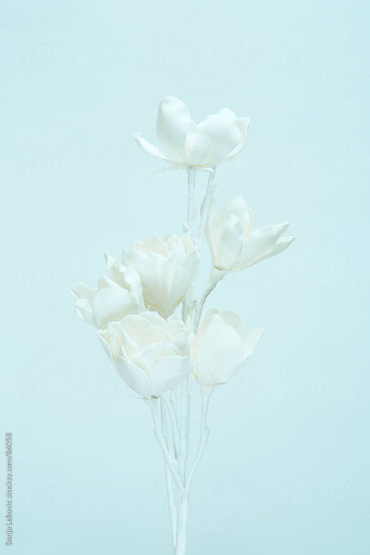 white flower on a light blue background by Sonja Lekovic for Stocksy United