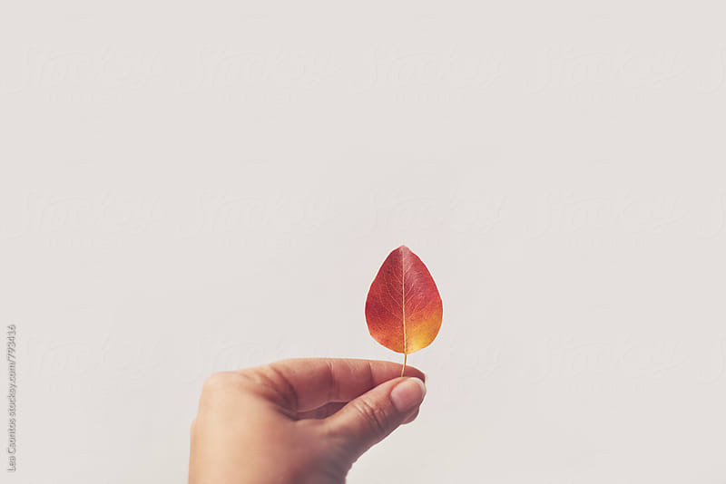 Hand holding a colorful leaf against a white wall by Lea Csontos for Stocksy United