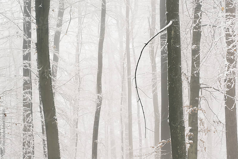 Trees in winter on a foggy day by Peter Wey for Stocksy United
