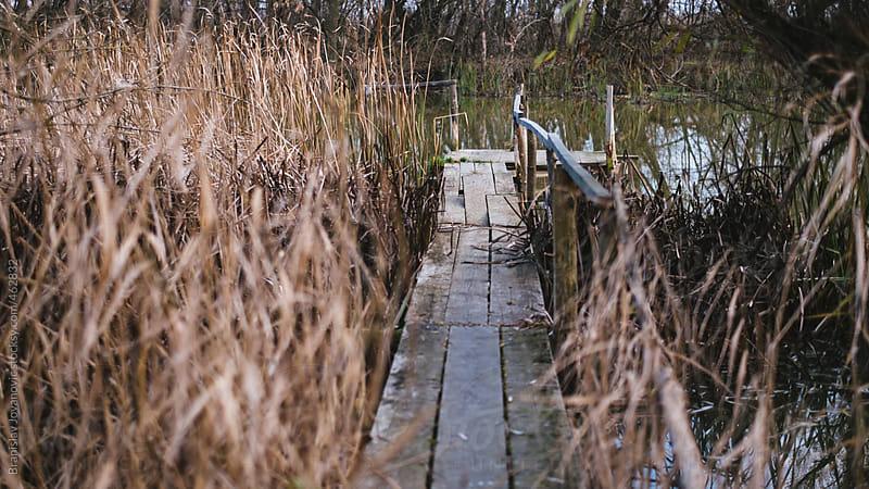 Wooden Dock In the Swamp by Brkati Krokodil for Stocksy United