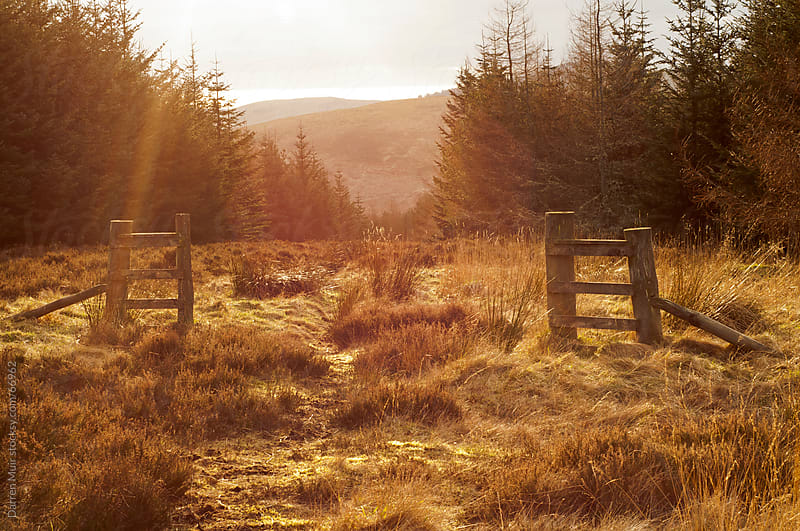 A deer gate in the Scottish highlands.  by Darren Muir for Stocksy United