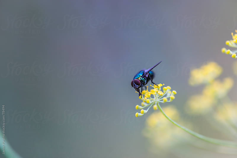 portrait of a fly on the flowers by Javier Pardina for Stocksy United