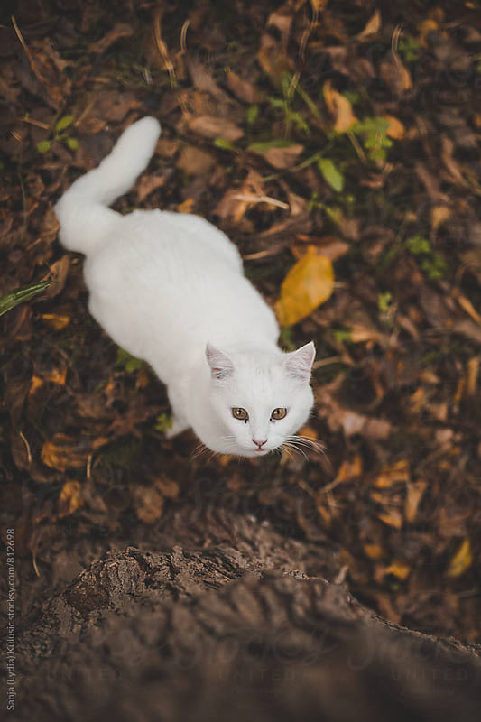 White stray cat looking up to the tree by Sanja (Lydia) Kulušić for Stocksy United