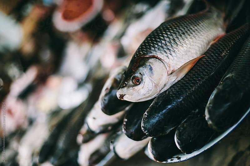 Market fish by Daria Berkowska for Stocksy United