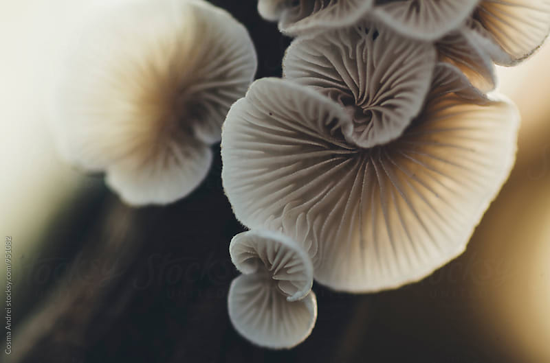 Mushrooms close-up with beautiful texture by Cosma Andrei for Stocksy United