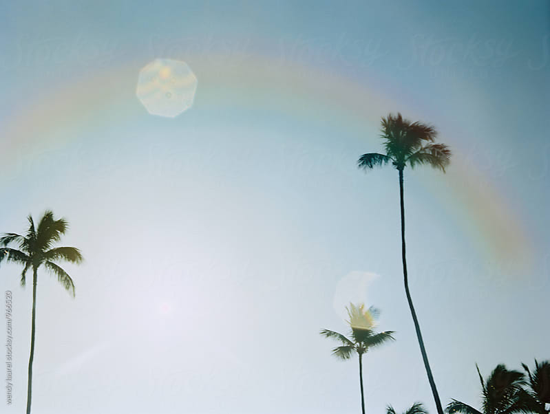 palm trees with rainbow  by wendy laurel for Stocksy United