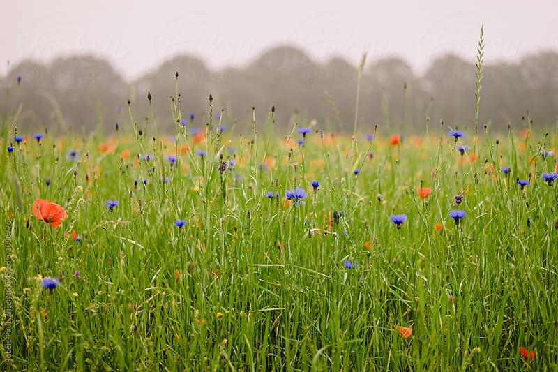 Flowers in Mist by Robert-Paul Jansen for Stocksy United