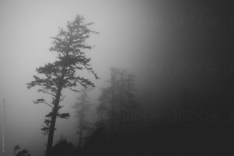 Black and White Silhouette of Trees in Fog by Kristine Weilert for Stocksy United