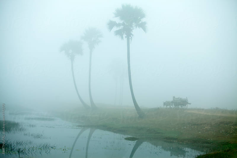 Cow driven cart in Mist by PARTHA PAL for Stocksy United