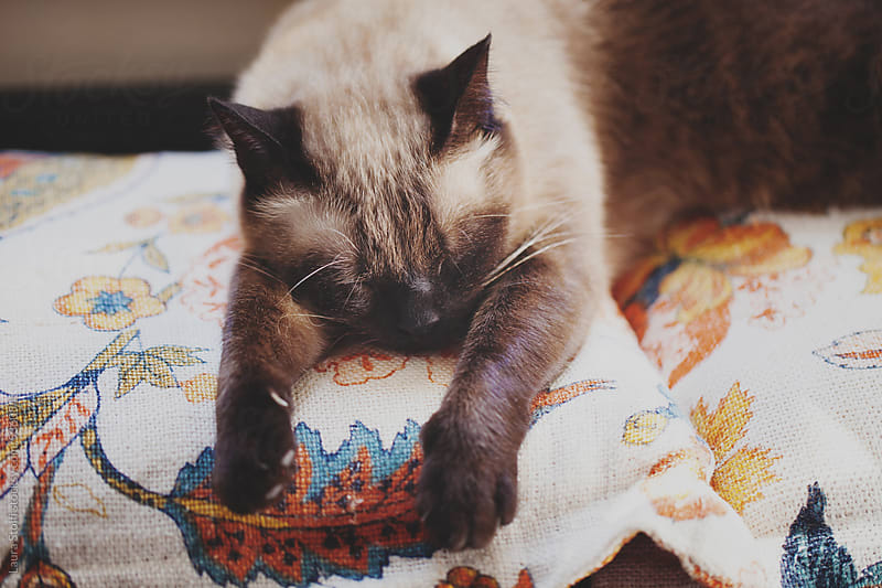 Cat sleeping hard on flowered cushions by Laura Stolfi for Stocksy United