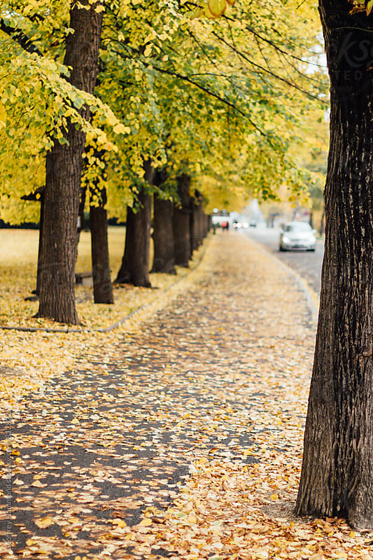 Autumn Trees in City Park by Geoffrey Hammond for Stocksy United