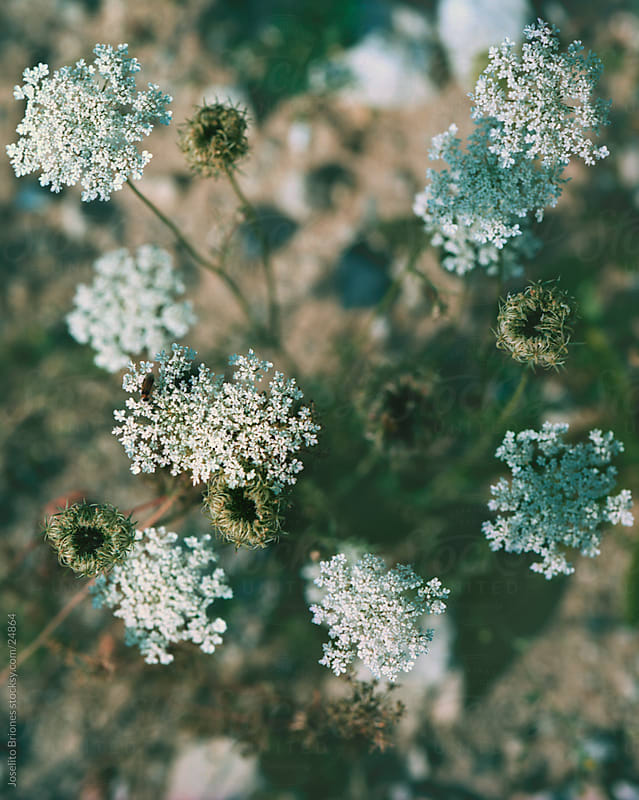 Dry Summer Weeds by Joselito Briones for Stocksy United