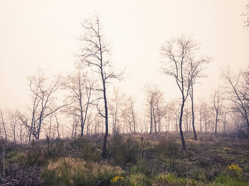 Misty forest in winter by GIC for Stocksy United