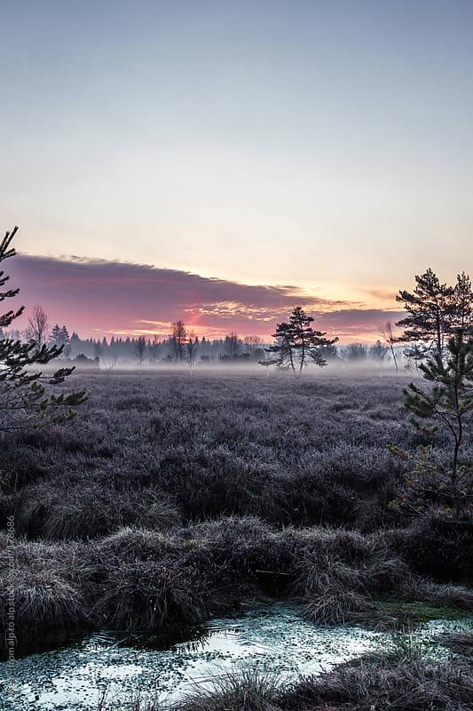 moor landscape in early morning mist by Leander Nardin for Stocksy United