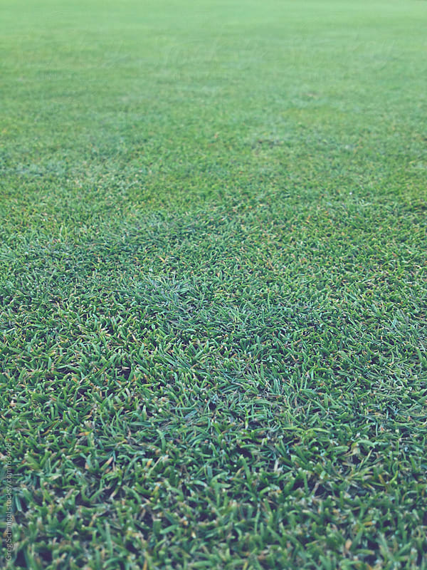 Green turf grass on a golf course by Greg Schmigel for Stocksy United