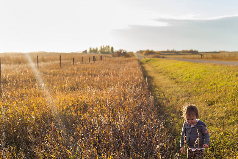Young child exploring prairie farm by Carey Shaw for Stocksy United