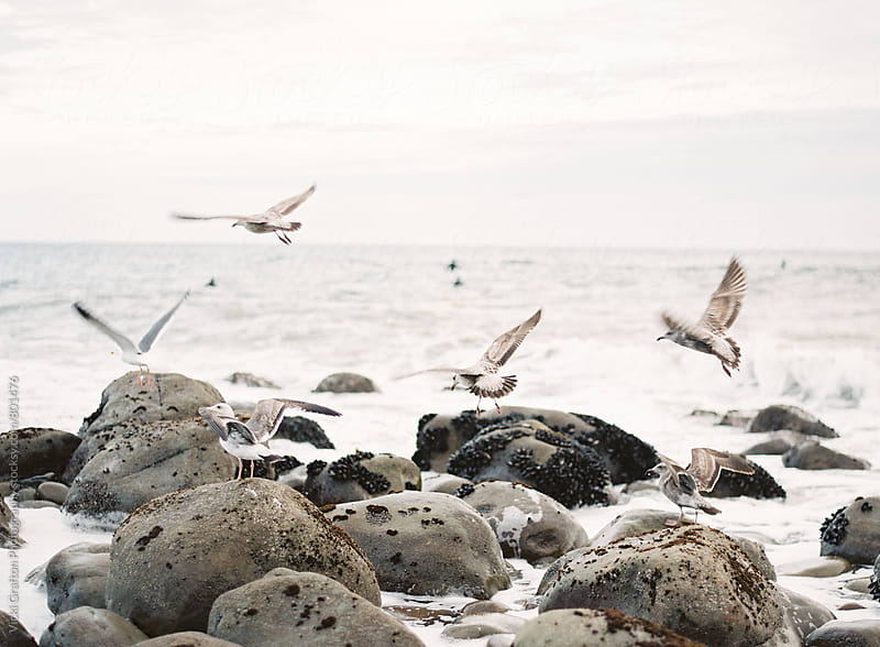 Seagulls flying by shore by Vicki Grafton Photography for Stocksy United