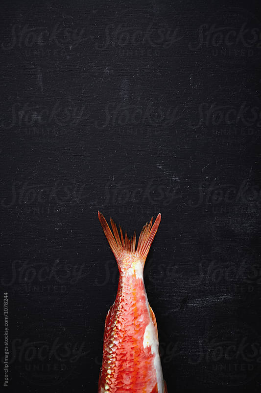 Red Mullet / Goatfish by Paperclip Images for Stocksy United