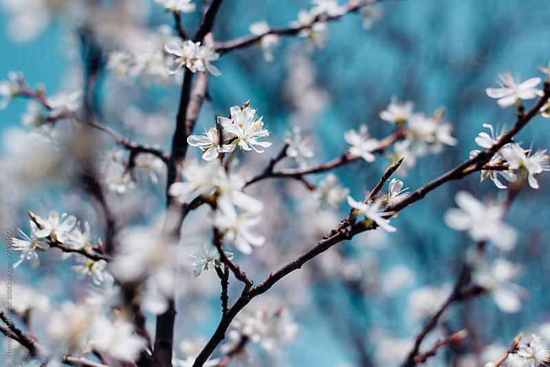 Spring Bloom by Nemanja Glumac for Stocksy United