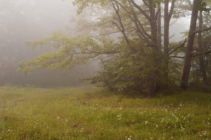 Edge of the forest. Misty summer morning. by Svetlana Shchemeleva for Stocksy United