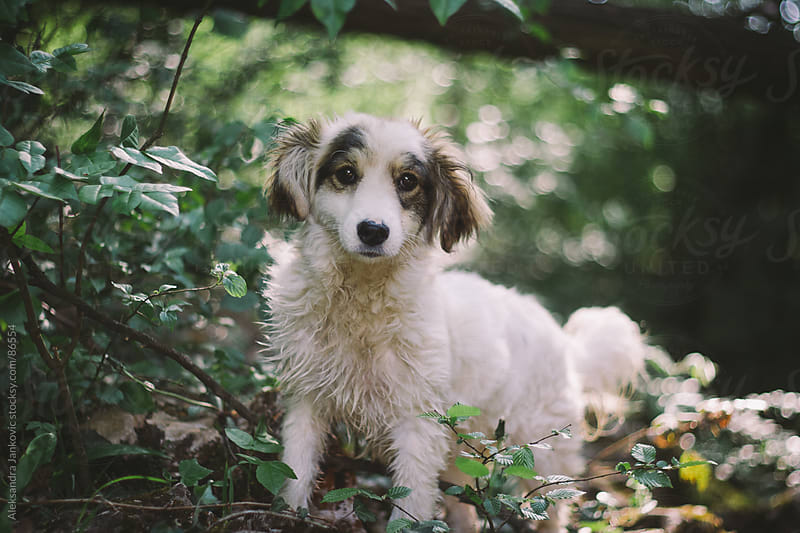 Cute little dog in the forest by Aleksandra Jankovic for Stocksy United