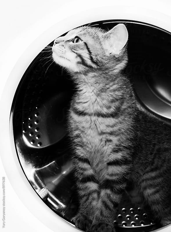 Kitty in washing machine by Yury Goryanoy for Stocksy United