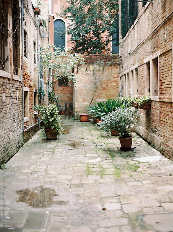 Outdoor courtyard garden in Venice by Kirstin Mckee for Stocksy United