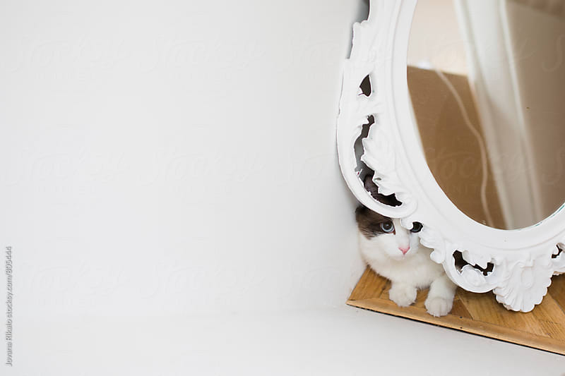 Cat is hiding behind a mirror by Jovana Rikalo for Stocksy United