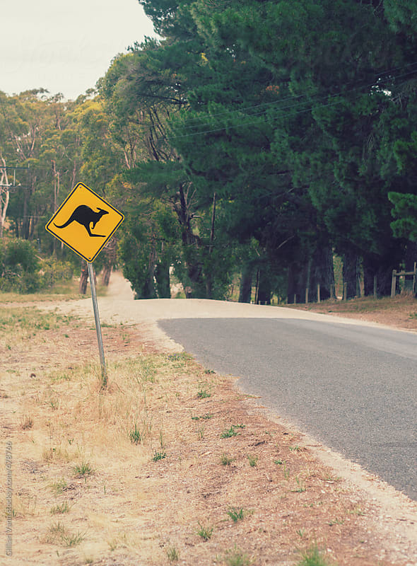 leaving the bitumen for dirt roads, there is a warning sign for kangaroos by Gillian Vann for Stocksy United