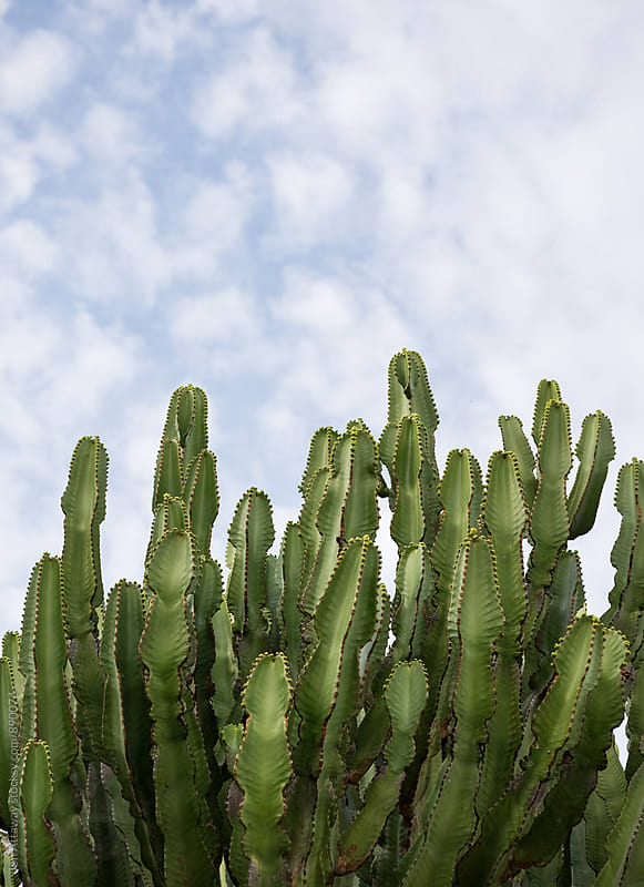 Cactus reaching up to a blue sky by Jon Attaway for Stocksy United