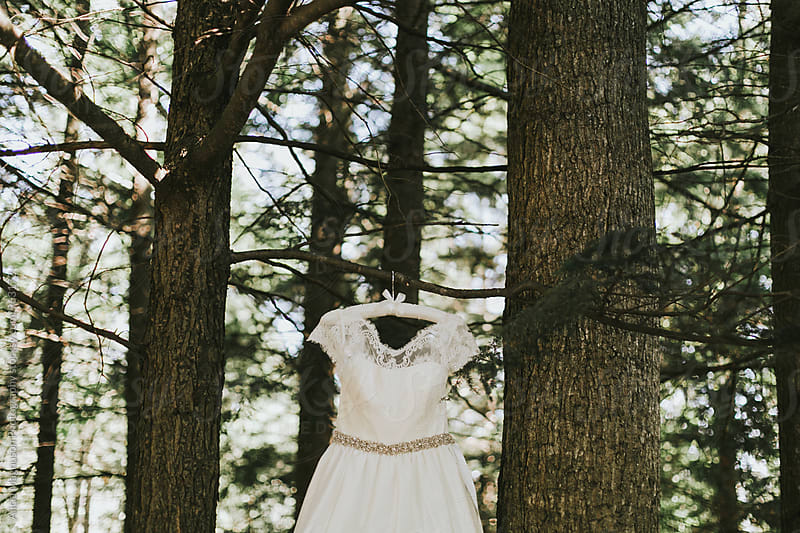 Wedding Dress Hanging in Tree by Alicia Magnuson Photography for Stocksy United