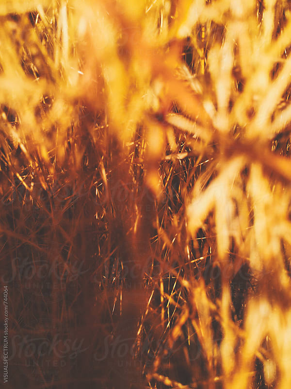 Dry Yellow Grass Background by VISUALSPECTRUM for Stocksy United