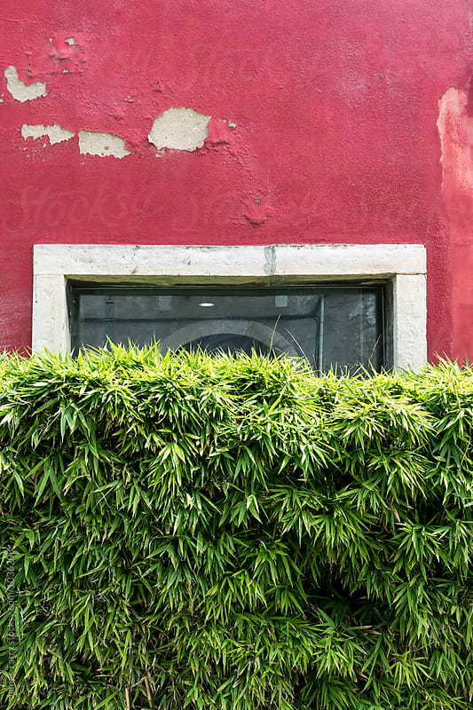 Red wall, green hedge by James Tarry for Stocksy United