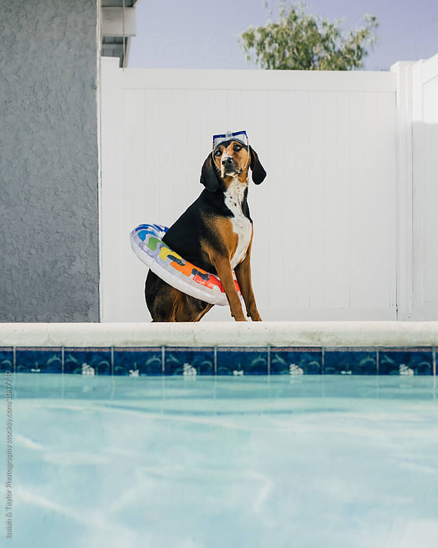 Summer Dog Hanging Out By Pool