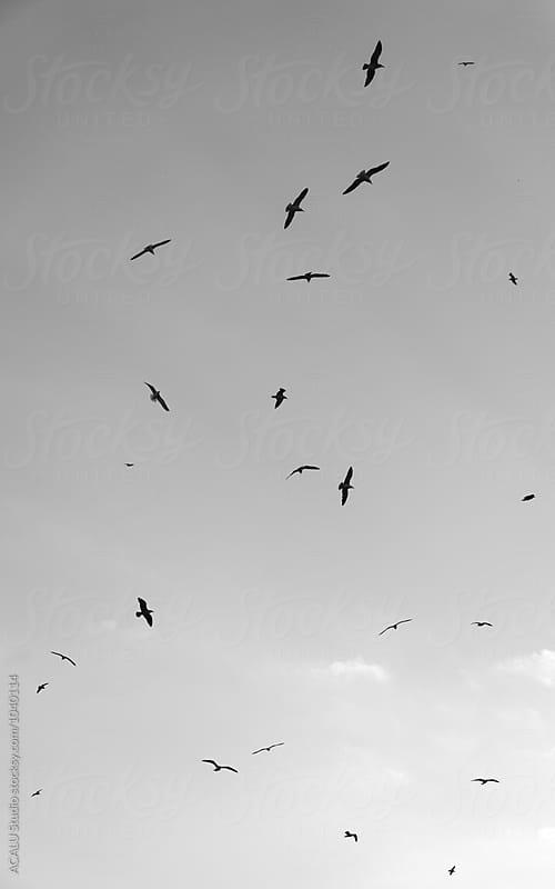Gulls flying in the sky by ACALU Studio for Stocksy United
