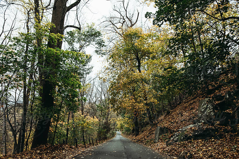 Road leading through colorful fall trees by Isaiah & Taylor Photography for Stocksy United
