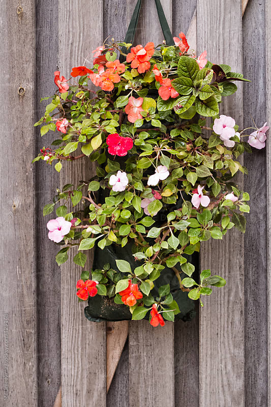 Pot with flowers is hanging on a wooden wall by Melanie Kintz for Stocksy United