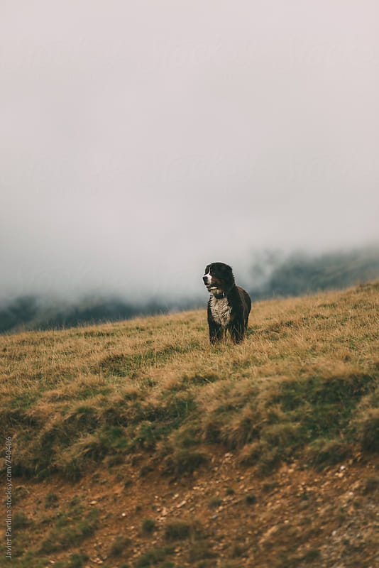 dog walks in the mountains by Javier Pardina for Stocksy United