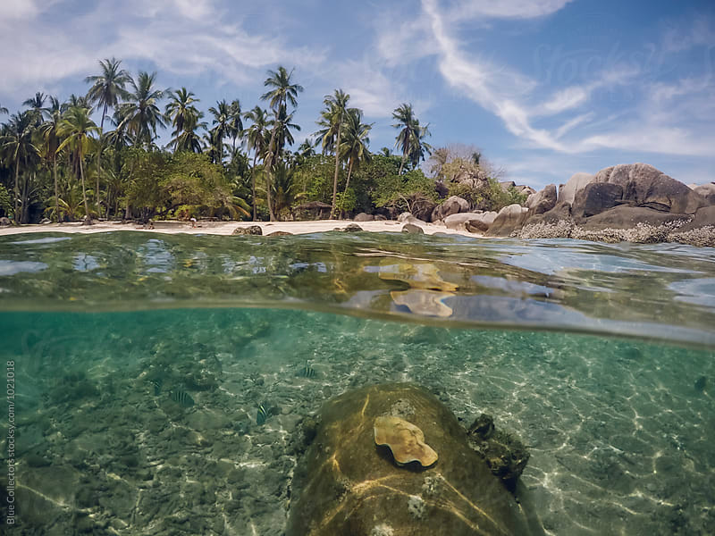 nice view from below the water of a tropical beach with coral and fish by Jordi Rulló for Stocksy United