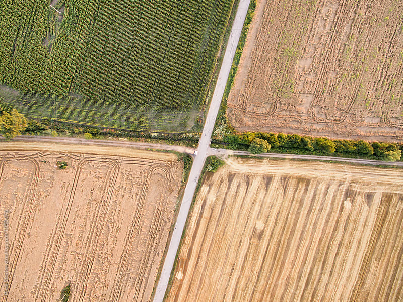 Crossroad separating farmland  by Pixel Stories for Stocksy United